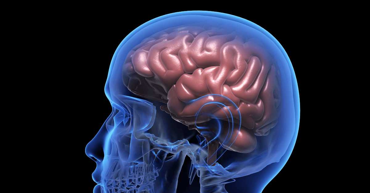 Why Is The Brain So Important?